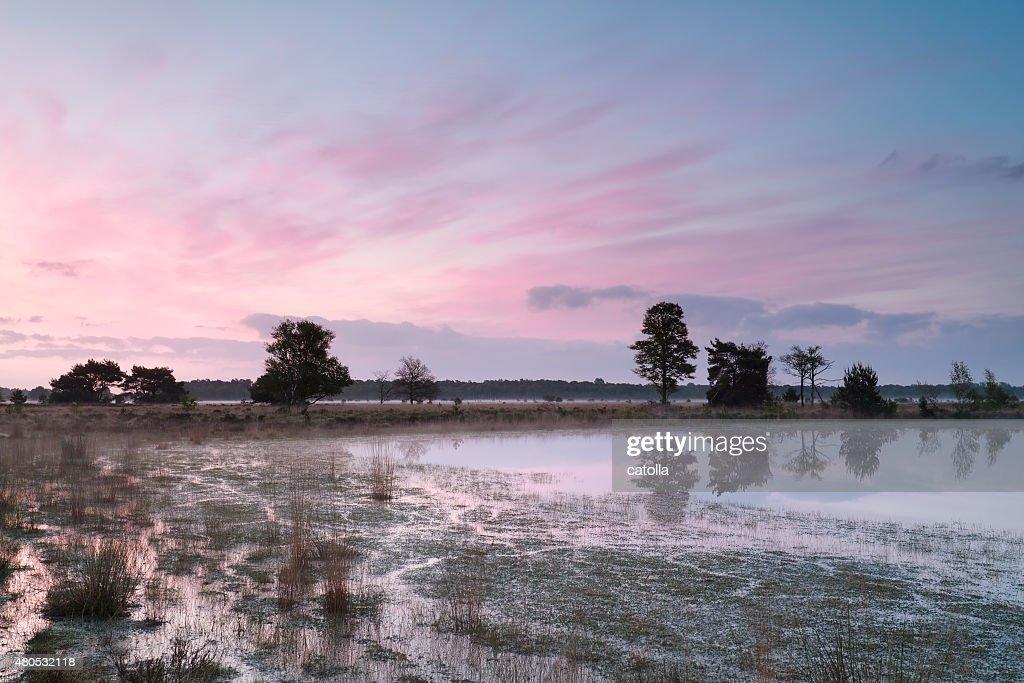serene sunrise on wild lake : Stock Photo