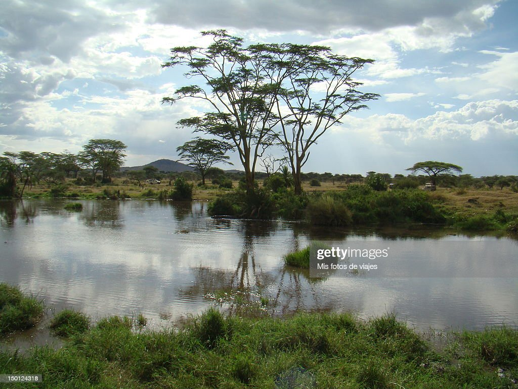Serengeti National Park Tanzania : Stock Photo