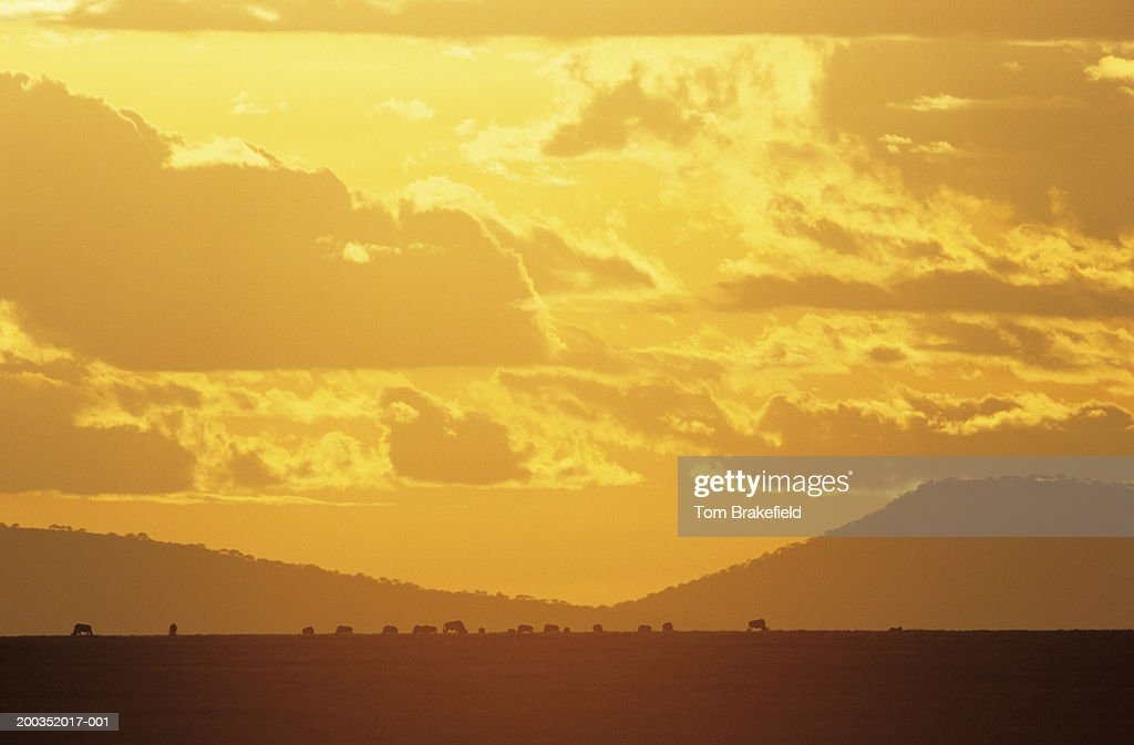 Serengeti, 'The Endless Plain,' sunset, Tanzania, Africa : Stock Photo