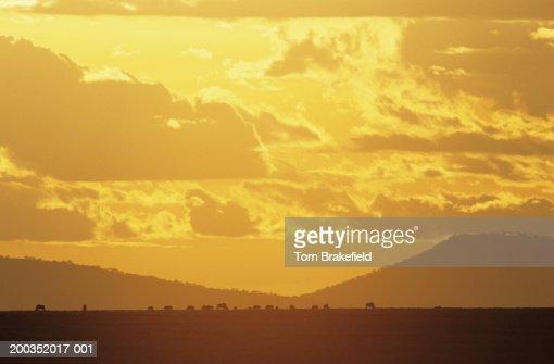 Serengeti, 'The Endless Plain,' sunset, Tanzania, Africa : Bildbanksbilder