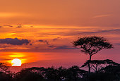 Serengheti sunset in Tanzania
