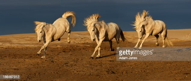 Series of running camargue horses