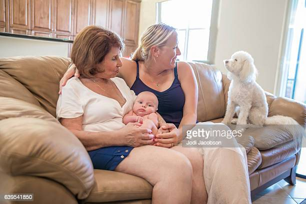 Series:Grandmother Introduces family dog to the new baby