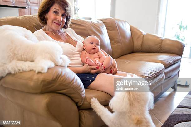 Series:Grandmother Introduces family dogs to the new baby