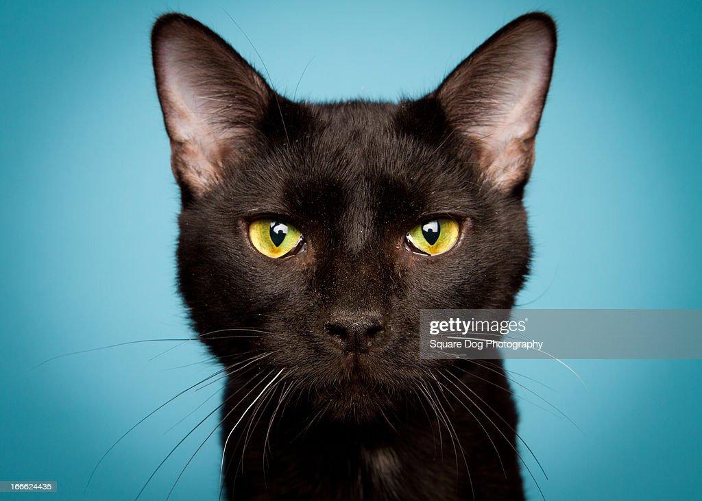 Serious Cat : Stock Photo