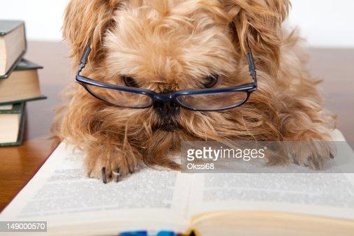 Ernst Hund in Gläsern : Stock-Foto