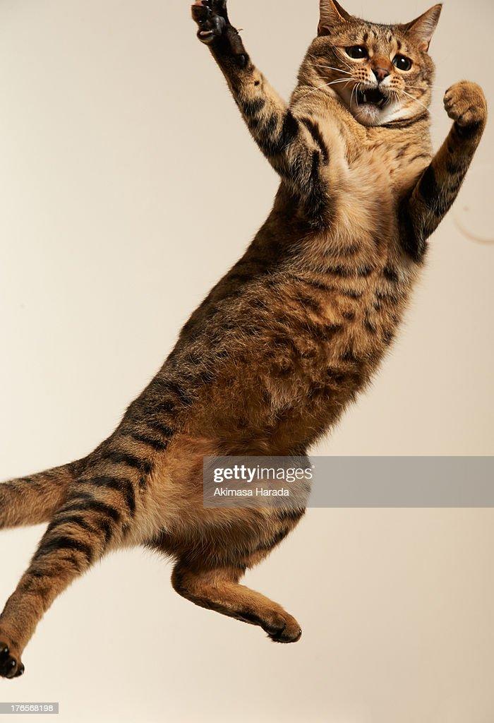 serious face cat : Stock Photo