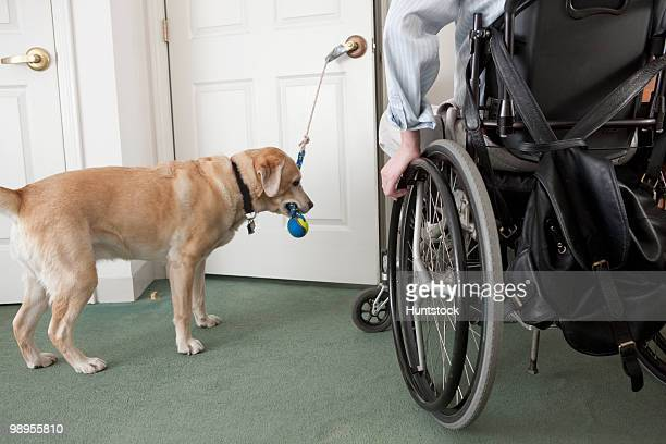 Service dog opening a door for a man in a wheelchair