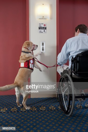 Service Dog Pushing Button For Elevator With A Man In A
