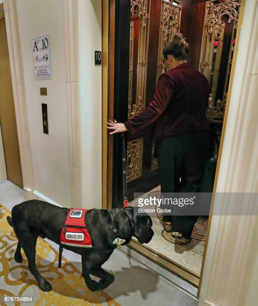Service dog Rescue heads into the elevator with his owner Jessica Kensky at the Plaza Hotel to attend the awards ceremony where he is being honored...
