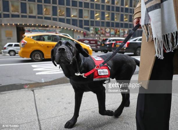 Service dog Rescue takes a walk around New York City with NEADS director of development Cathy Zemaitis before the awards ceremony where he is being...