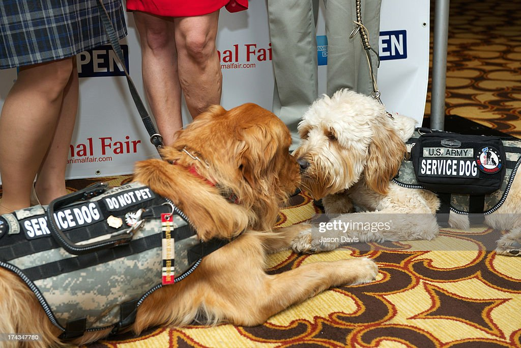 Service dogs Chauncey and Skip greet each other at AnimalFair.com Bark Breakfast Benefiting K9s For Warriors at the Loews Vanderbilt Hotel on July 24, 2013 in Nashville, Tennessee.
