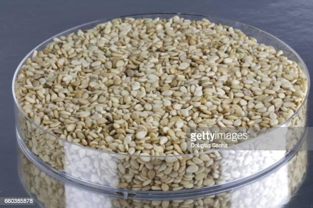 Serving dish of Sesame Seeds (Sesamum indicum)