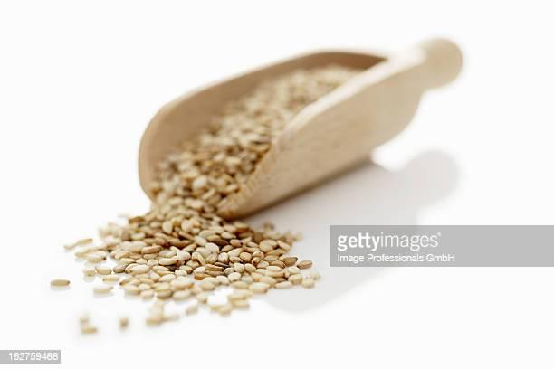 Sesame seeds in wooden scoop