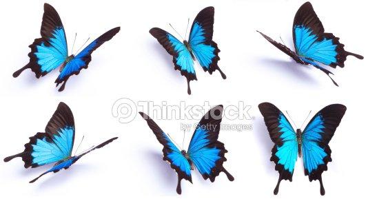 Set Di 6 Farfalla Blu Isolato Su Sfondo Bianco Foto Stock Thinkstock