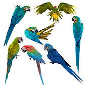 Set of beautiful macaw birds, Beautiful macaw , birds macaw isolated on white background