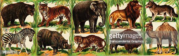 A set of die cut animals probably printed in Germany ca1890s The animals depicted are a bear a tiger an elephant a lion a wolf a camel a buffalo a...