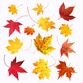 Autumn maple leaves collection, object set isolated on white.