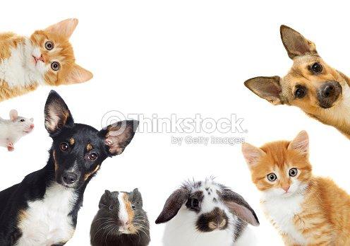 Set of pet