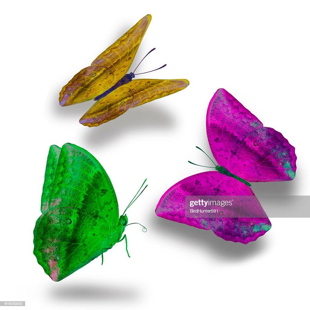 Set of the most beautiful butterflies : Foto de stock