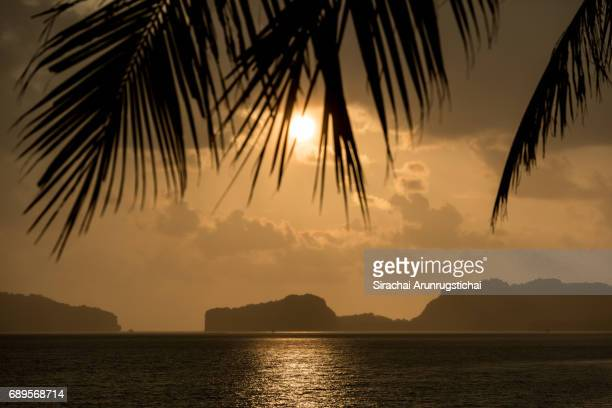 Setting sun over the sea with palm leaves