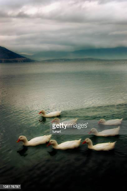 Seven Ducks