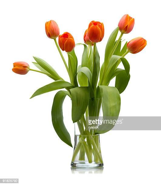 Siete rojo, naranja frescas cortadas tulipanes en un florero de vidrio aislado