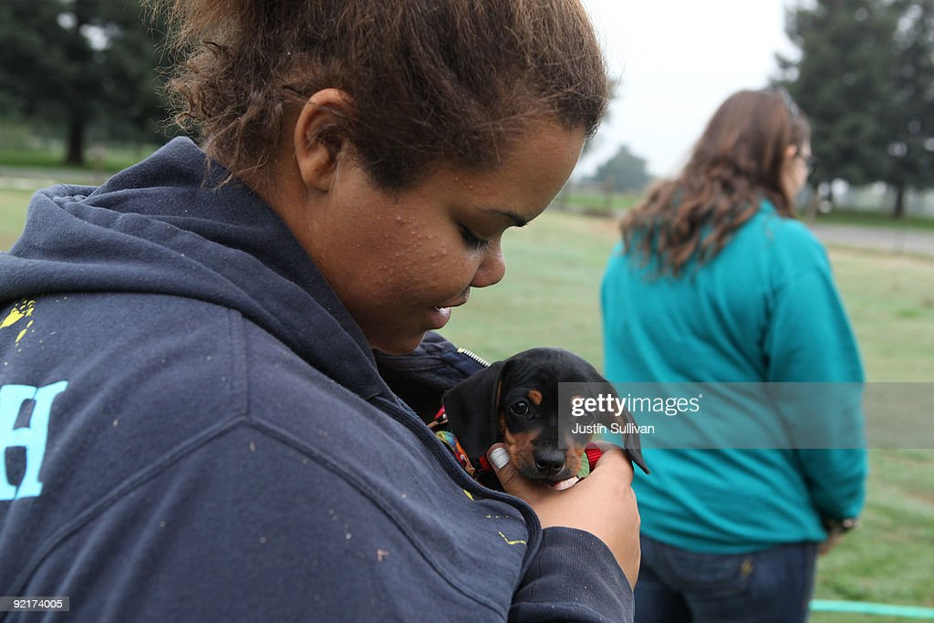 Seventeen year-old Marissa Hamilton holds a puppy that belongs to her teacher as she walks to class at Wellspring Academy October 20, 2009 in Reedley, California. Struggling with her weight, seventeen year-old Marissa Hamilton enrolled at the Wellspring Academy, a special school that helps teens and college level students lose weight along with academic courses. When Marissa first started her semester at Wellspring she weighed in at 340 pounds and has since dropped over 40 pounds of weight in the first two months of the program. According to the Centers for Disease Control and Prevention, 16 percent of children in the US ages 6-19 years are overweight or obese, three times the amount since 1980.