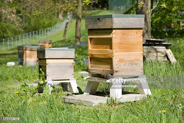 Several beehives in a green field
