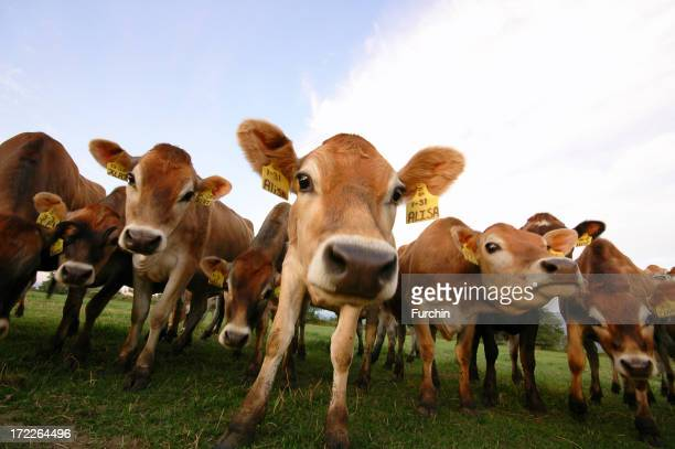 Several cows standing at the pasture