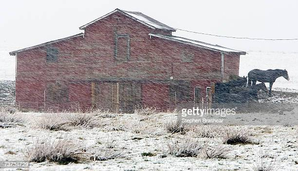 Several horses take shelter from the wind and blowing snow near a barn as a spring storm beings to make its way through Billings Montana March 28...