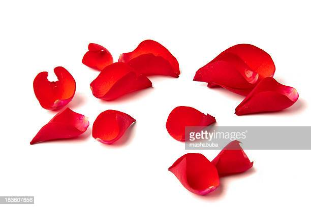 Several red rose petals against white background