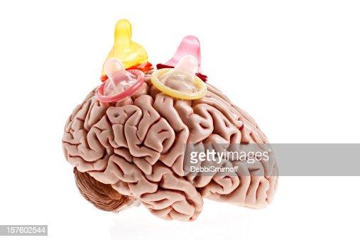 Brain Sex Id 58