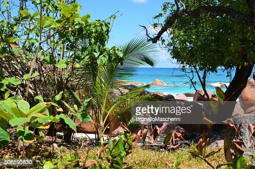 Seicheles Ilhas. Praslin : Foto de stock