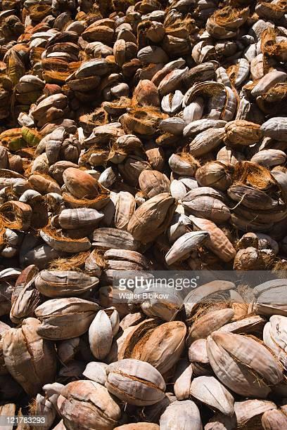 Seychelles, La Digue Island, L'Union Estate Plantation, Coconut husks