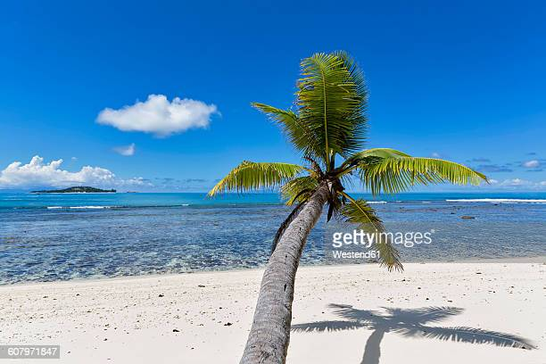 Seychelles, Praslin, Anse Kerlan, coconut palm and Cousin Island