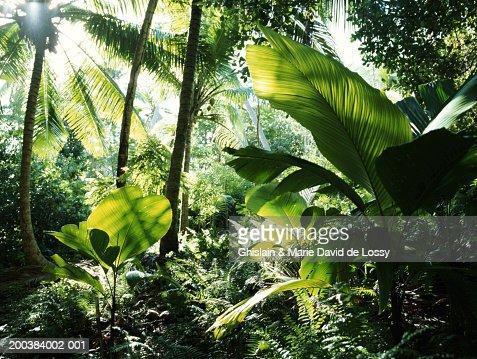 Seychelles, rainforest