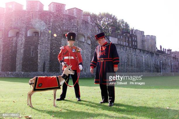 Sgt Paul Martin and yeoman warder Idwal Bellis feeds Bobby the antelope who has taken up residence at the Tower of London Bobby an Indian black buck...
