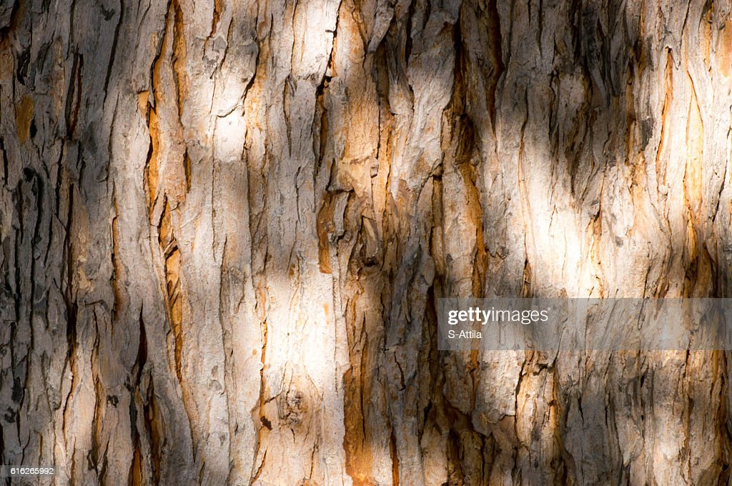 Shades and light on an old tree trunk : Stock Photo