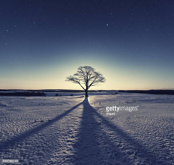 Shadow in the Snow