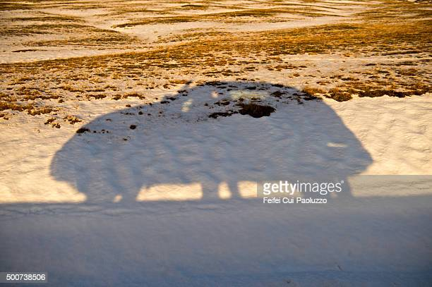 Shadow of a car on road at Jökulsarlon Iceland