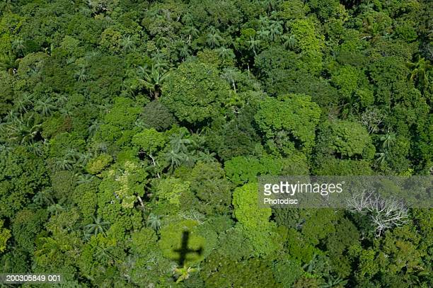 Shadow of aeroplane flying over forest, aerial view