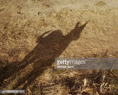 Shadow of dog on grass : Stock Photo