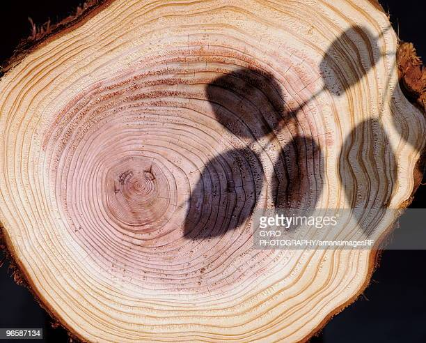 Shadow of leaves on a tree stump showing age rings