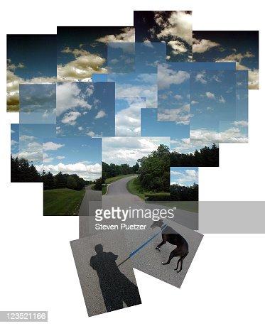 Shadow of man walking dog : Stock Photo
