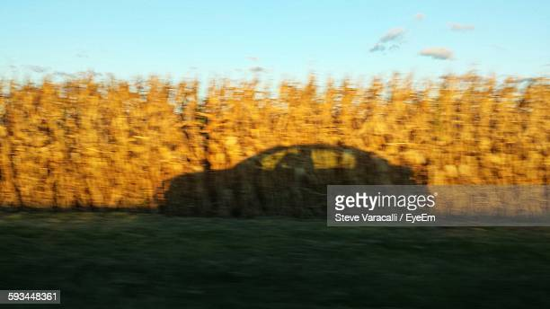 Shadow Of Moving Car On Corn Field