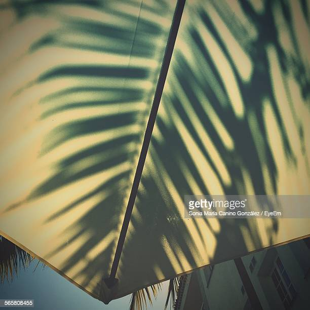 Shadow Of Palm Leaf On Umbrella