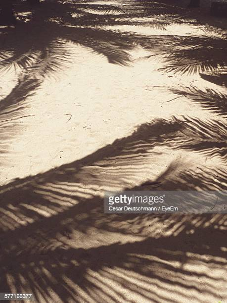 Shadow Of Palm Leaves On Sand