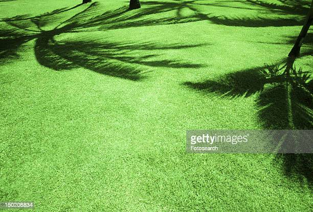 Shadow of palm trees on green grass