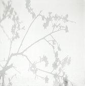 Shadow of peach blossom on wall